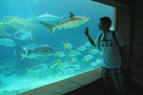 The impressive aquarium housed many different kinds of fish.
