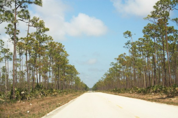 The scenery for most of the drive to Lucayan National Park.