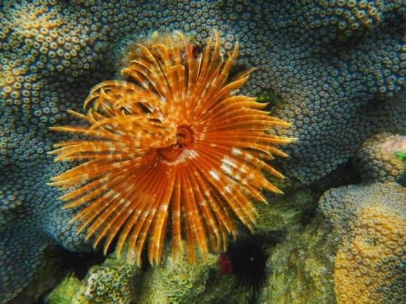 Sea anemone flower...