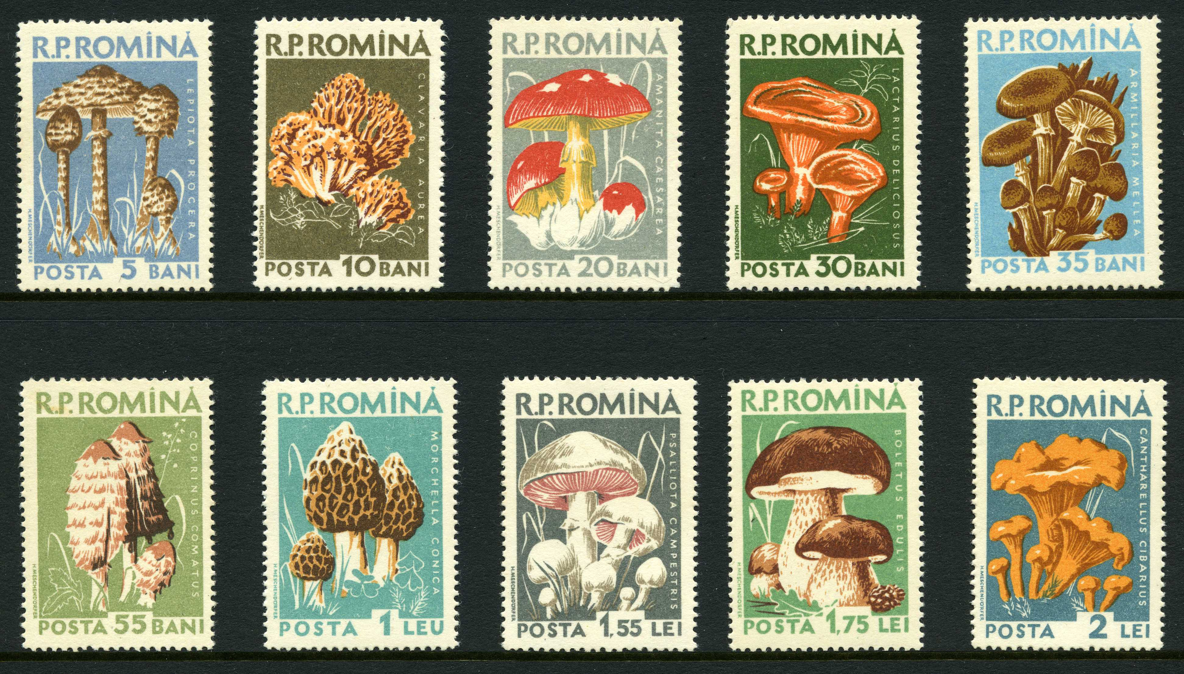 Fotos In Postergröße Fungi_on_stamps: Introduction And References