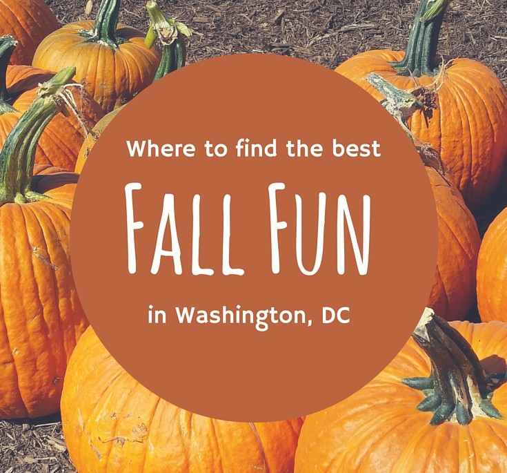 Discover Great Activities for Halloween in Washington, DC