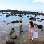 Abalone Cove tidepools