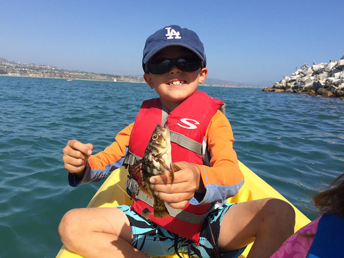 Dana Point Harbor see bass