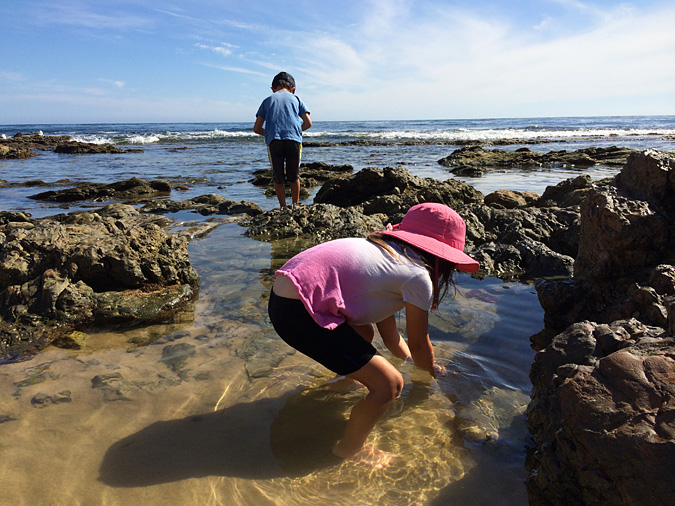 Kids exploring the Crystal Cove tide pools