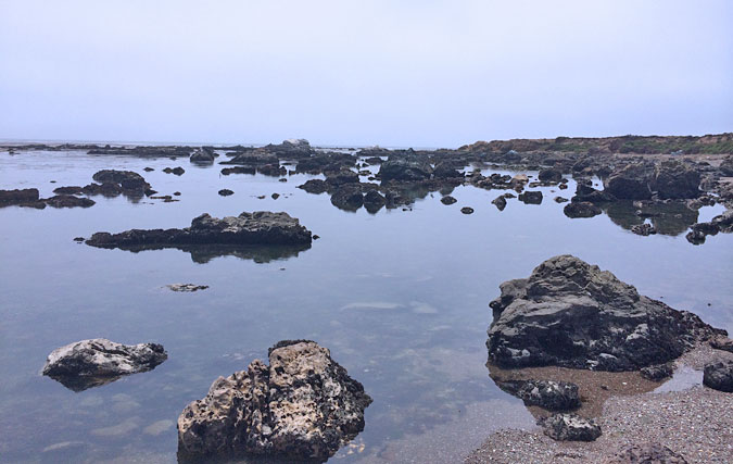 I'll admit I geeked out on the weird Estero Bluffs State Park intertidal zone