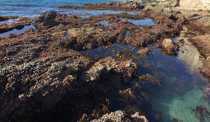 Victoria Beach tide pools