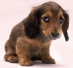 bad_puppy_1