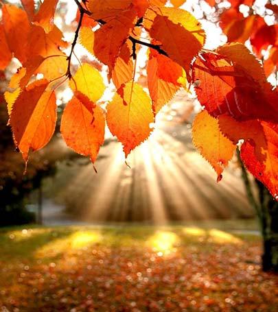 Pretty Fall Desktop Wallpaper Sonbahar Feyza Bayraktar Blog Yazısı