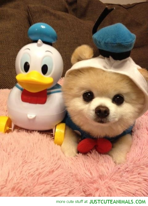 Cute Duckling Wallpaper 15 Absolutely Adorable Animals In Costumes Lady Bunny Guff