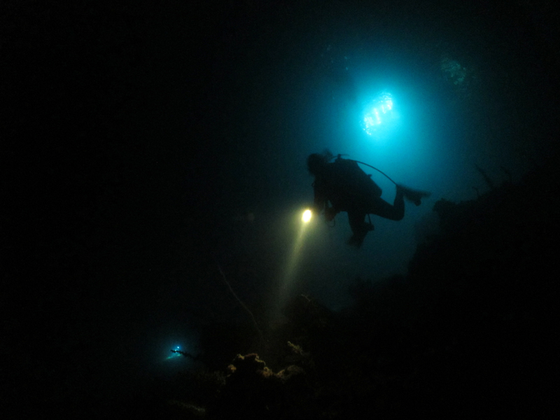 utila-night-dive