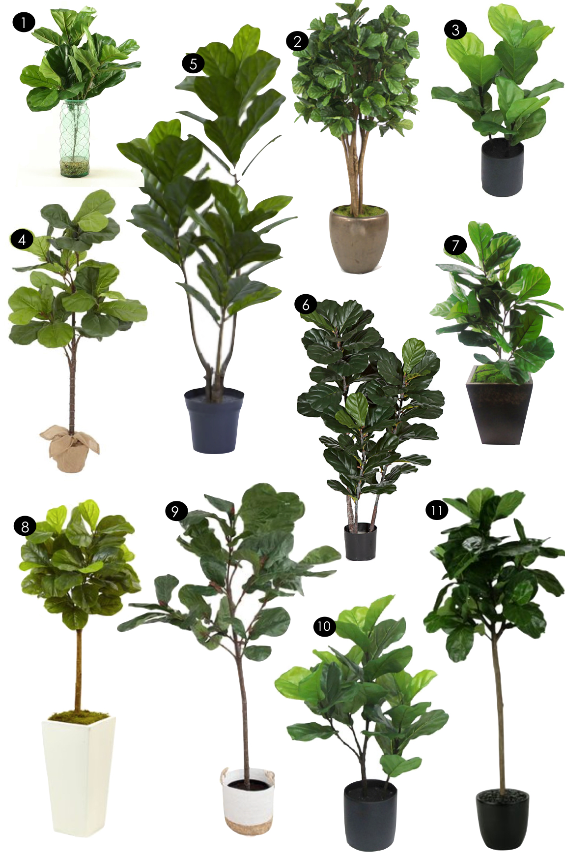 Fiddle Leaf Fig Tree Fiddle Leaf Fig Trees Kiki 39s List