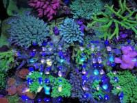 Aquarium LED-Beleuchtung Fotos beste Reef Aquarium LED ...