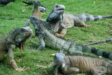 Parque de las Iguanas, Guayaquil