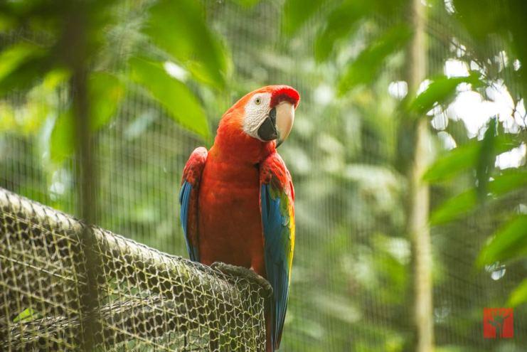 ...durante nuestra visita al centro de protección animal AmaZOOnico en Misahuallí
