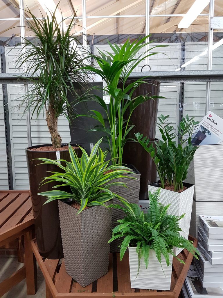 Unusual House Plants For Sale House Plants For Sale At Dean S Garden Centre In York