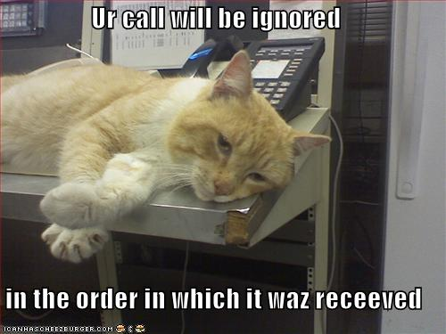 funny-pictures-cat-ignores-your-phone-call