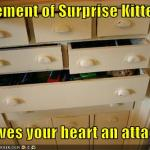 funny-pictures-element-of-surprise-cat-gives-you-a-heart-attack