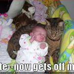 funny-pictures-cat-is-not-a-big-fan-of-babies