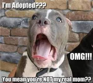 Adopt a rescue dog - funny picture