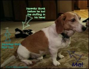 Booker The Dog Surveying his Domain DearKidLoveMom.com