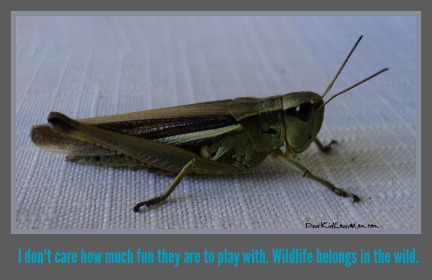 """Wildlife belongs in the wild. By which I mean """"not in the house."""" DearKidLoveMom.com"""