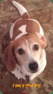 I am a good boy. DearKidLoveMom.com