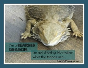 I am a bearded dragon. I'm not going to shave no matter what the trend is. (Everyone else, go find your chin.) DearKidLoveMom.com