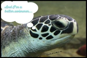 Sea Turtles eat jellyfish and are great swimmers. DearKidLoveMom.com