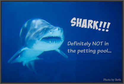 Shark! Not part of the petting pool. DearKidLoveMom.com
