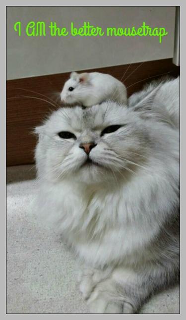 I AM the better mousetrap. DearKidLoveMom.com