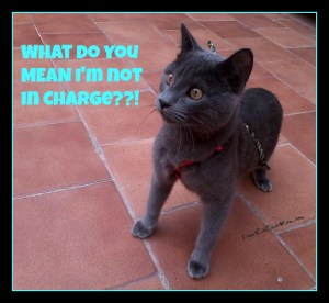 What do you mean I'm not in charge? DearKidLoveMom.com