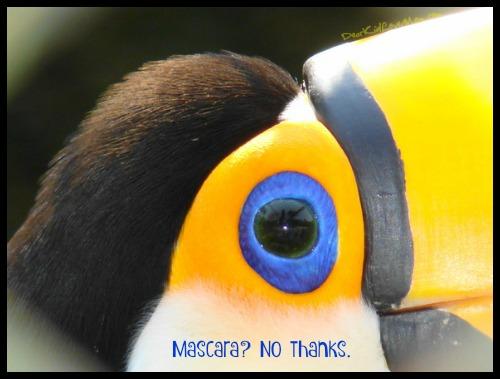 Mascara? Not really necessary.... DearKidLoveMom.com