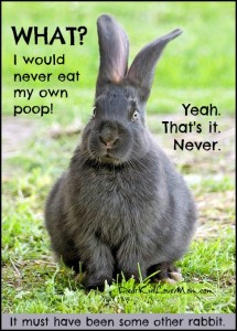 WHAT? I would never eat my own poop. Yeah. That's it. Never. It must have been somebunny else. DearKidLoveMom.com