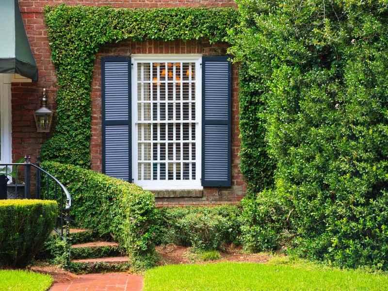Tipps für den Sichtschutz im Garten - Heckenpflanzen - tipps sichtschutz garten privatsphare