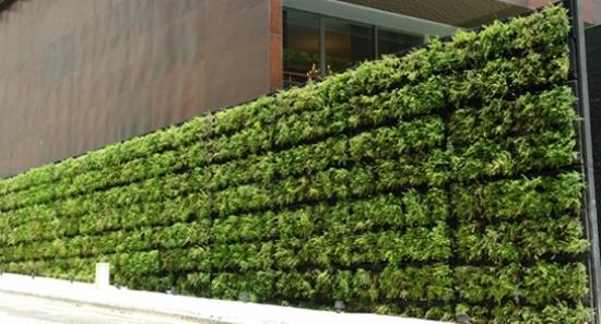 Grüne-Wand-Ideen-Windschutz-Terrassejpeg 550×297 Pixel Terasse - garten pflanzen sichtschutz