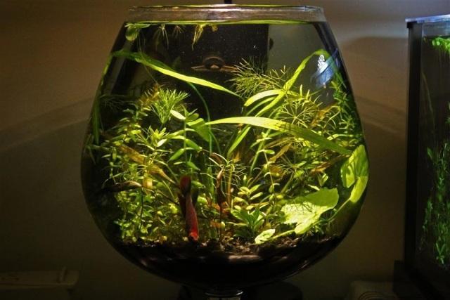 Wasserpflanzen Fur Aquarium Die Richtige Wahl Und Pflege