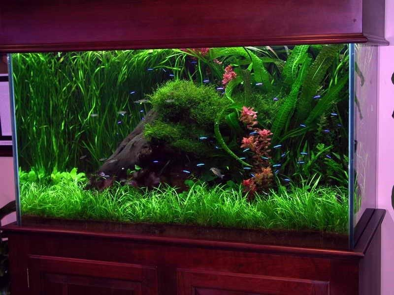 Aquarium Basteln