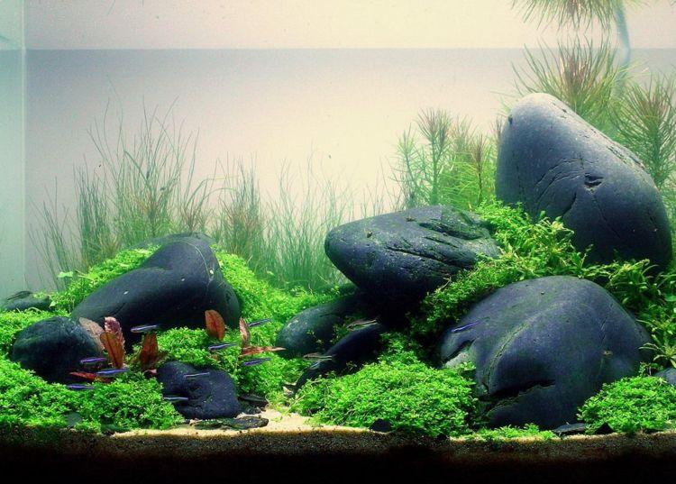 Einrichten Eines Aquariums