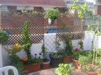 Balkon Sichtschutz mit Pflanzen