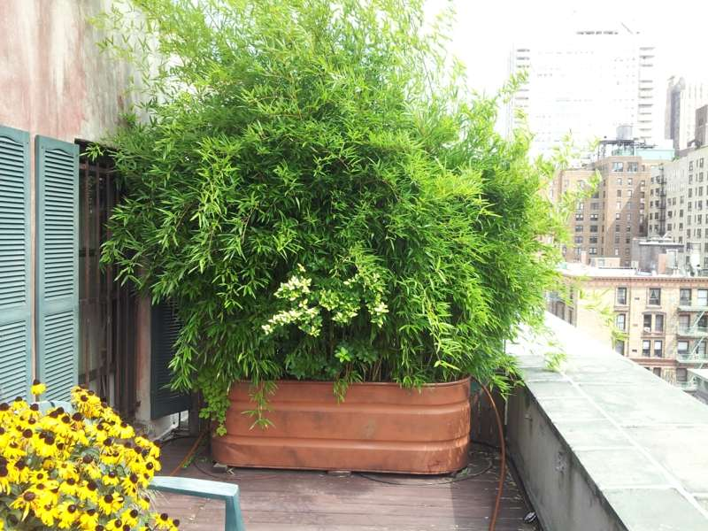 Bambus Im Kubel Als Sichtschutz Und Deko Auf Der Terrasse