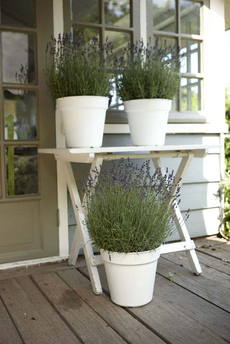 Balkonpflanzen Gegen Mucken 15 Neu 20 Pflanzen Gegen Mucken Das