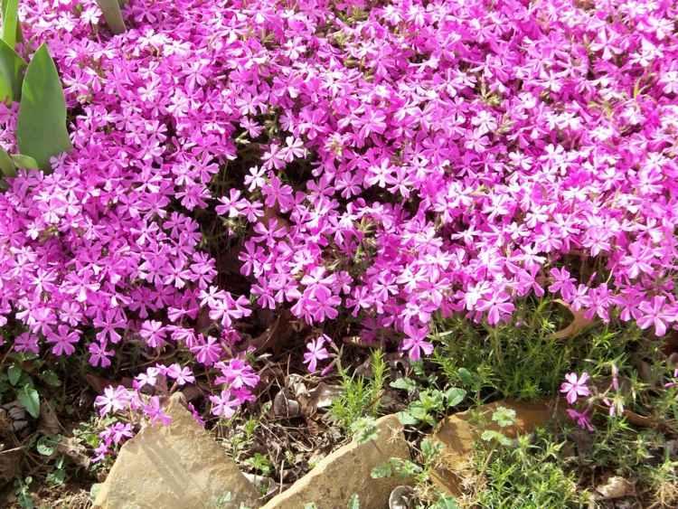 wintergarten gestalten: verschiedene typen im vergleich. pflanzen ...