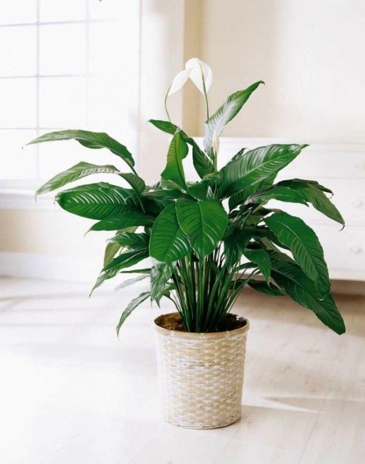 Pflanzen Fürs Badezimmer Ohne Fenster