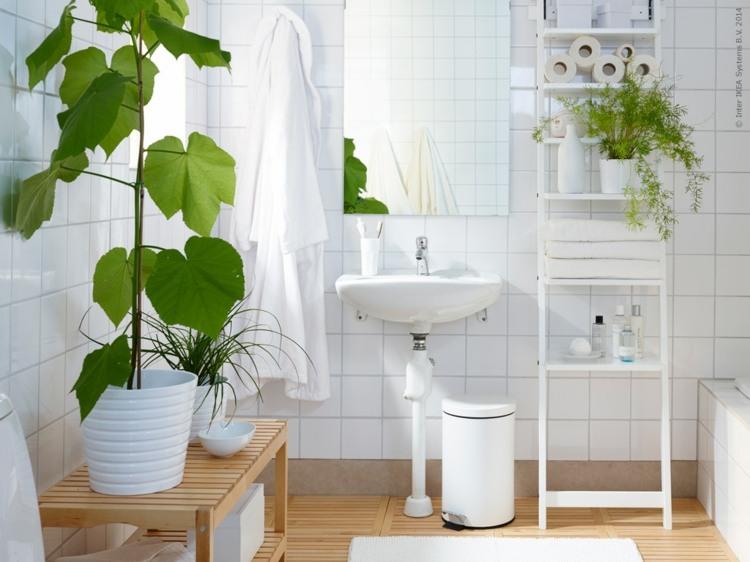 Pflanzen Für Bad Mit Wenig Licht