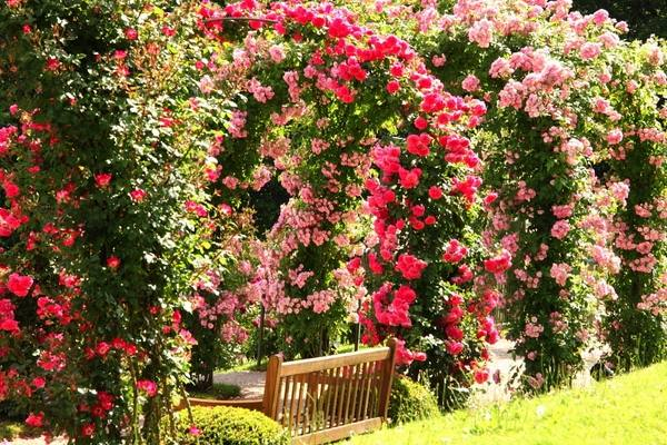 The Charming And Romantic Beauty Of A Splendid Rose Garden