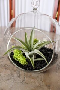 20 creative air plant containers and terrarium ideas