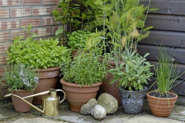 How To Grow A Herb Garden Design Ideas For Outdoors And