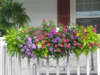 Flower box arrangements  summer window and balcony decor ...