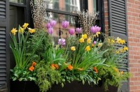Flower box arrangements  summer window and balcony decor ...
