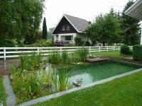 Natural pools design ideas  a swimming pond without chemicals
